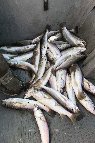 Catch Speckled Trout in Destin Florida